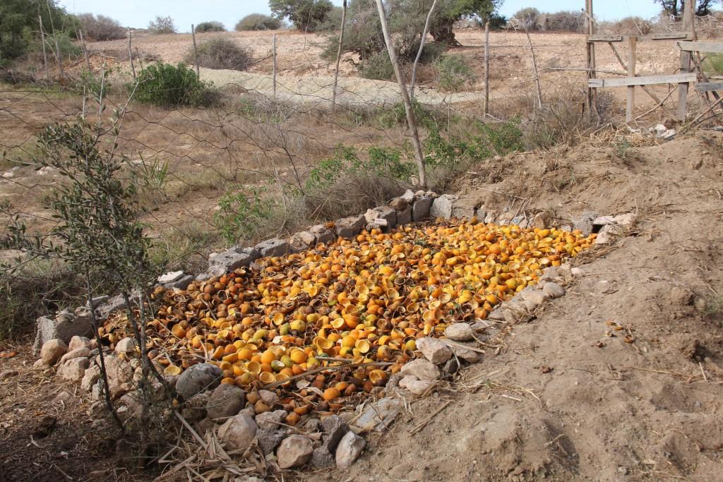 orange_dry-1024x683